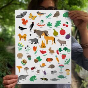 Přehledný plakát s obrázky z rozlišovacích značek pro školky